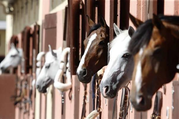 Случная болезнь лошадей: инструкция, лечение, фото, диагностика