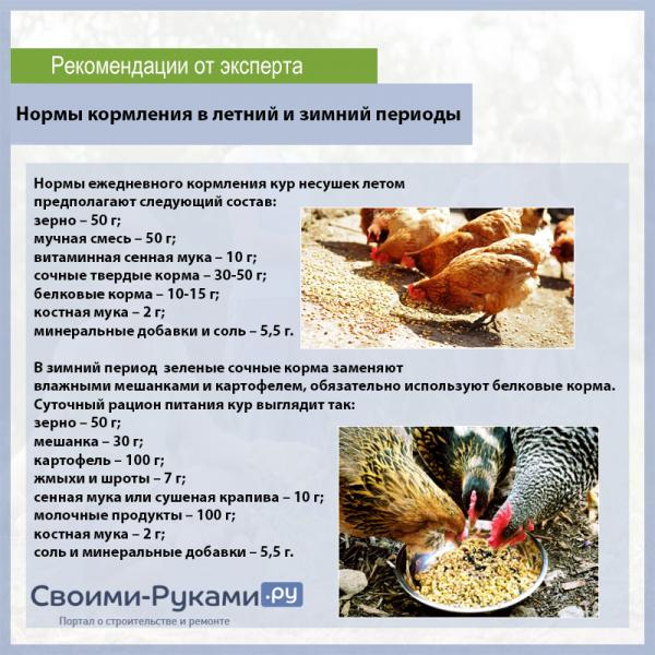 Сколько зерна надо курице