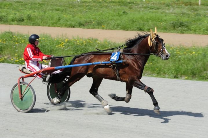 Максимальная и средняя скорость лошади, зависимость от аллюра