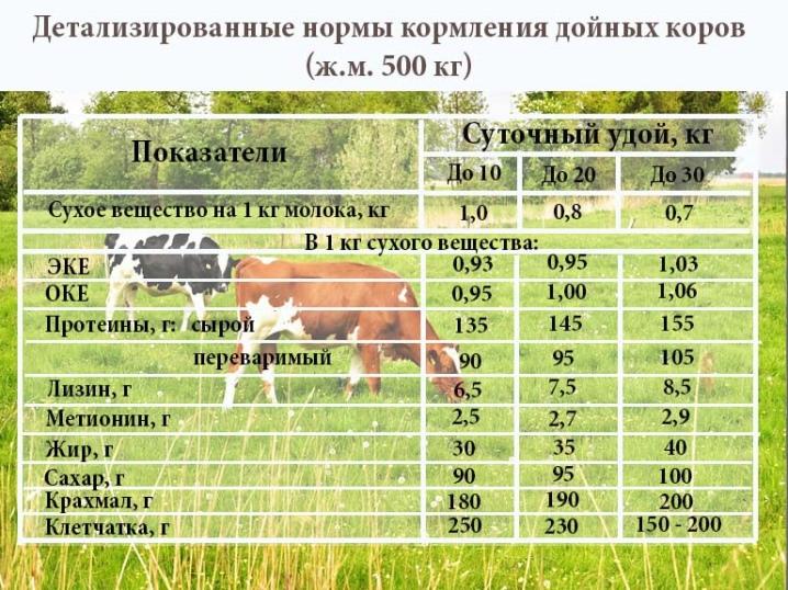 Сколько весит корова: средние показатели, таблица измерения веса крс, несколько способов, как узнать вес без весов
