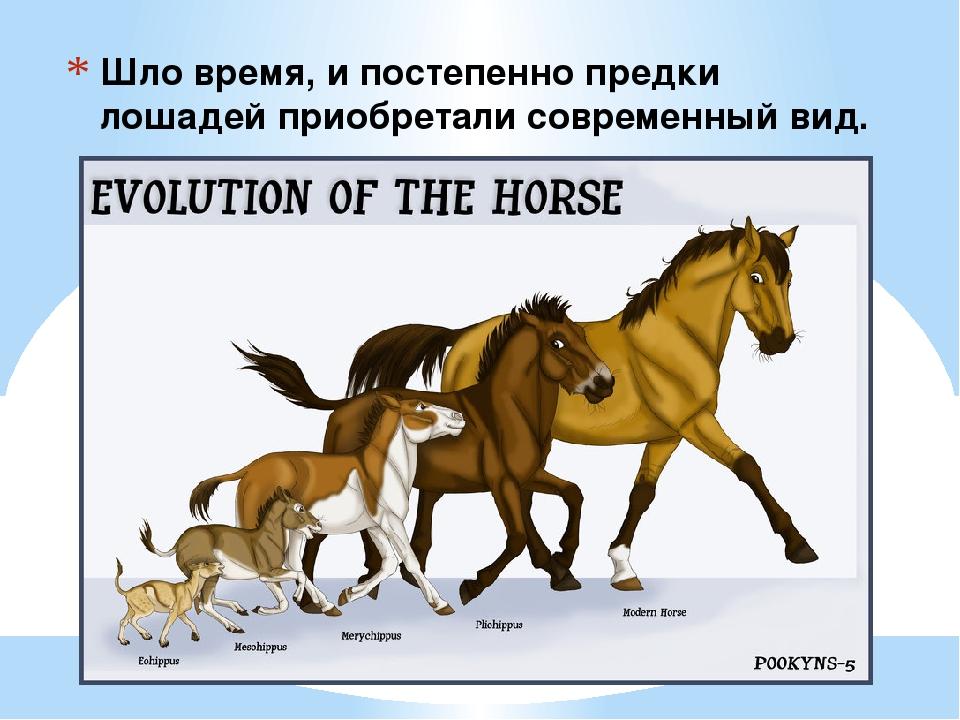Иппология или слово о лошадях — что это за наука?