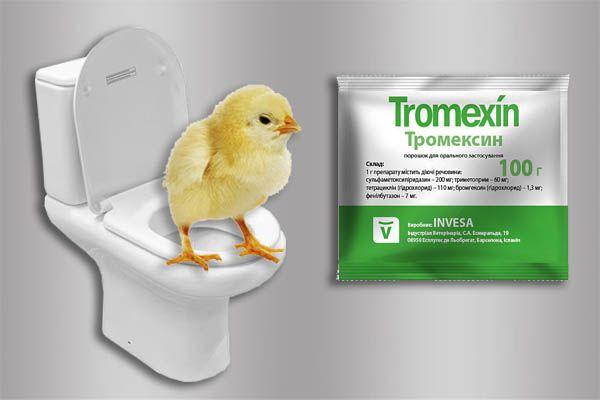 Понос у цыплят бройлеров: что делать, как лечить в домашних условиях