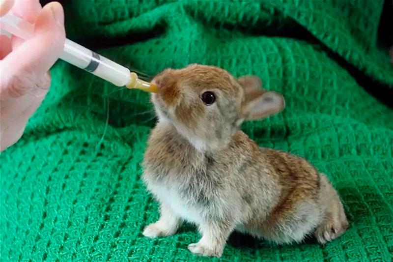 Почему крольчиха не кормит крольчат и как решить проблему