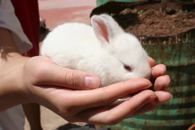 Как играть с кроликом — дрессировка декоративного кролика в домашних условиях