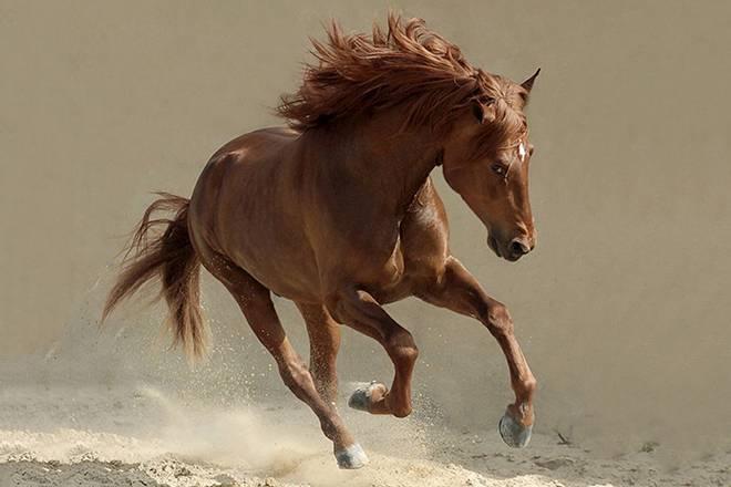 Самая быстрая лошадь в мире - какая это порода и достигаемая скорость