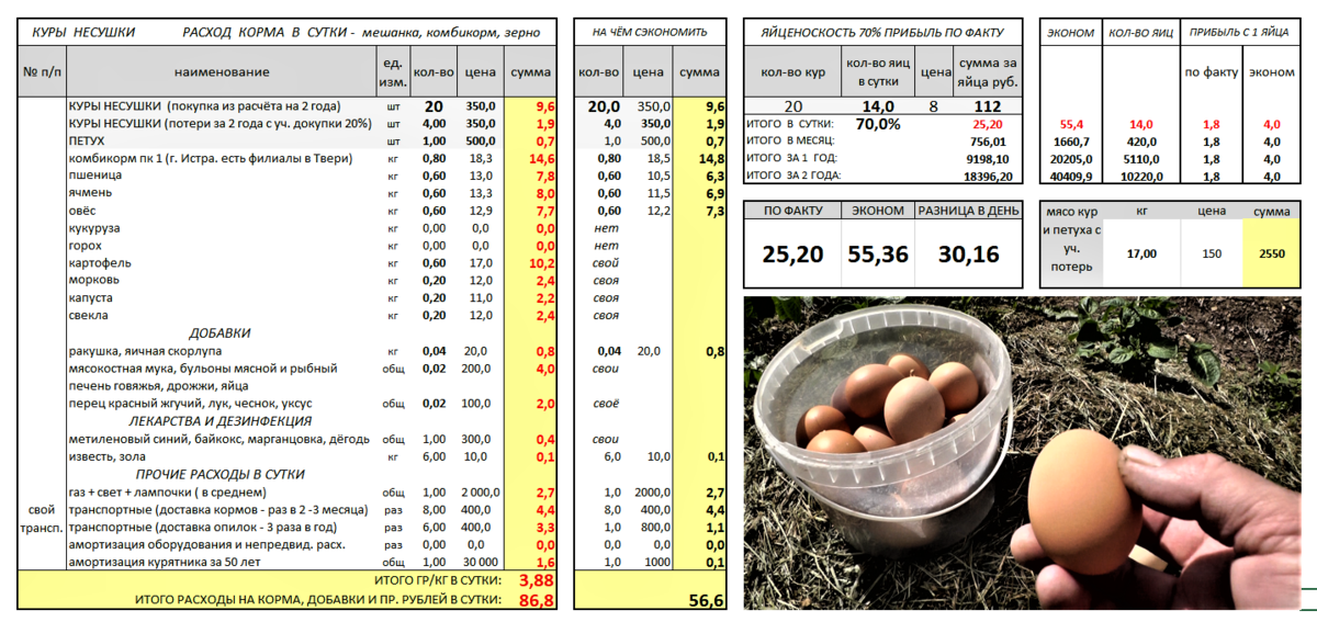 ✅ все о курином яйце: сколько весит, какое количество несет курица в день, схема - tehnomir32.ru
