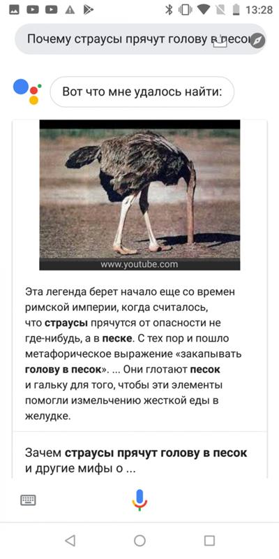 Страусы прячут голову в песок, а собаки бескорыстны: развенчиваем самые дурацкие мифы о животных