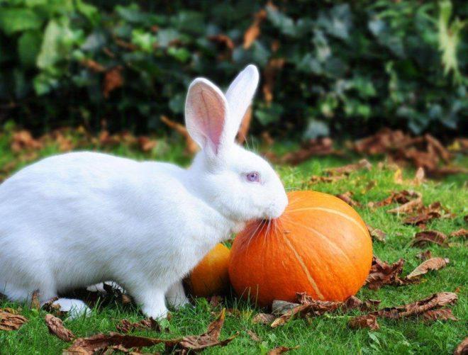 Можно ли кормить кроликов яблоками: с какого возраста и в каких количествах можно давать - гид по огороду
