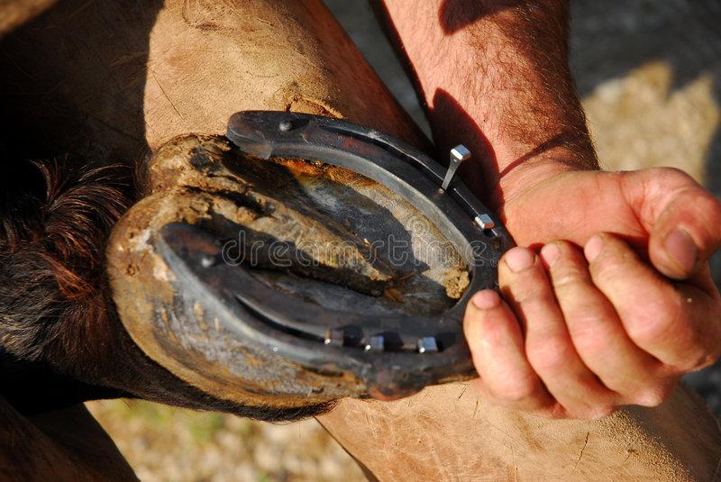 Зачем подковывают лошадей: описание, как правильно