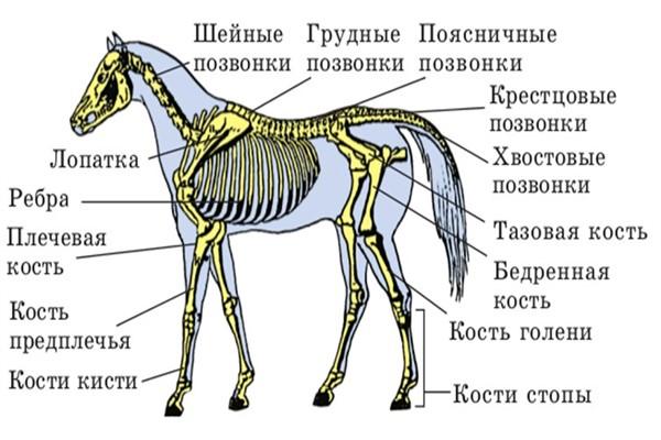 Внимательно рассмотрите рисунок тазобедренного сустава