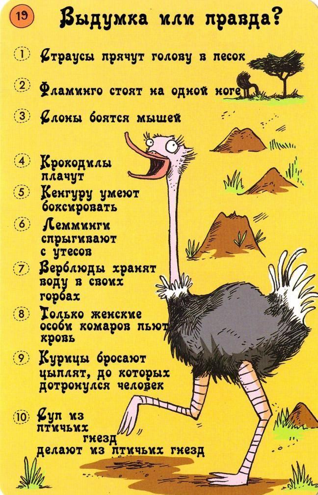 Почему страус прячет голову в песок: истоки мифа