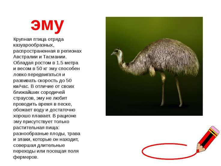 Где живет страус: все об особенностях природной зоны, где обитает птица