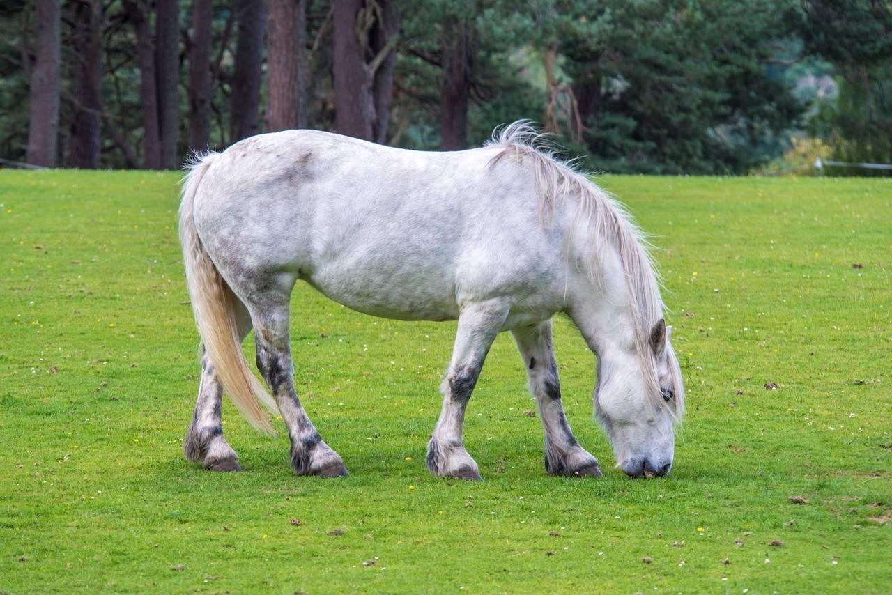 Андалузская порода фото и цена лошадей