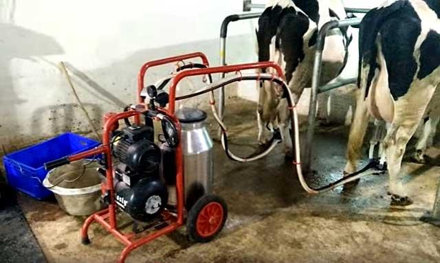 Доильные аппараты для коров: виды, особенности выбора и использования