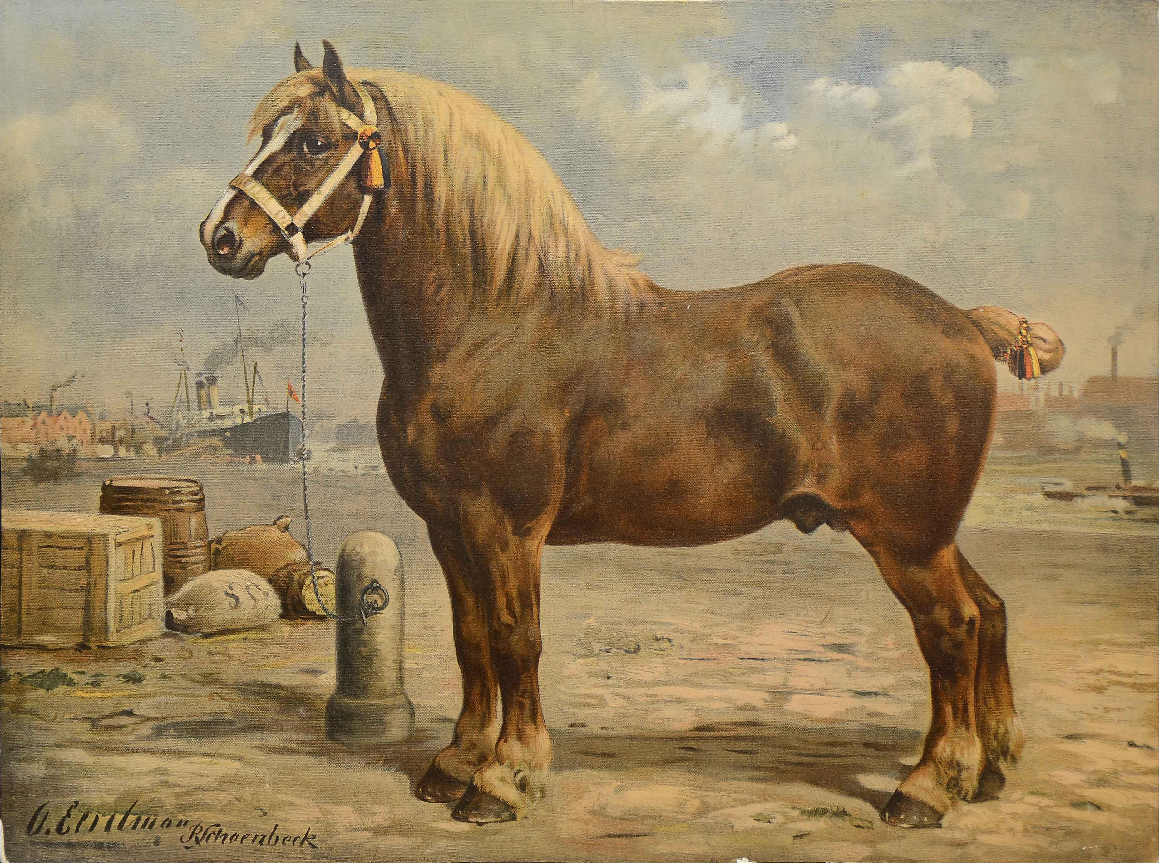 Лошади-тяжеловозы: породы, особенности, содержание и уход