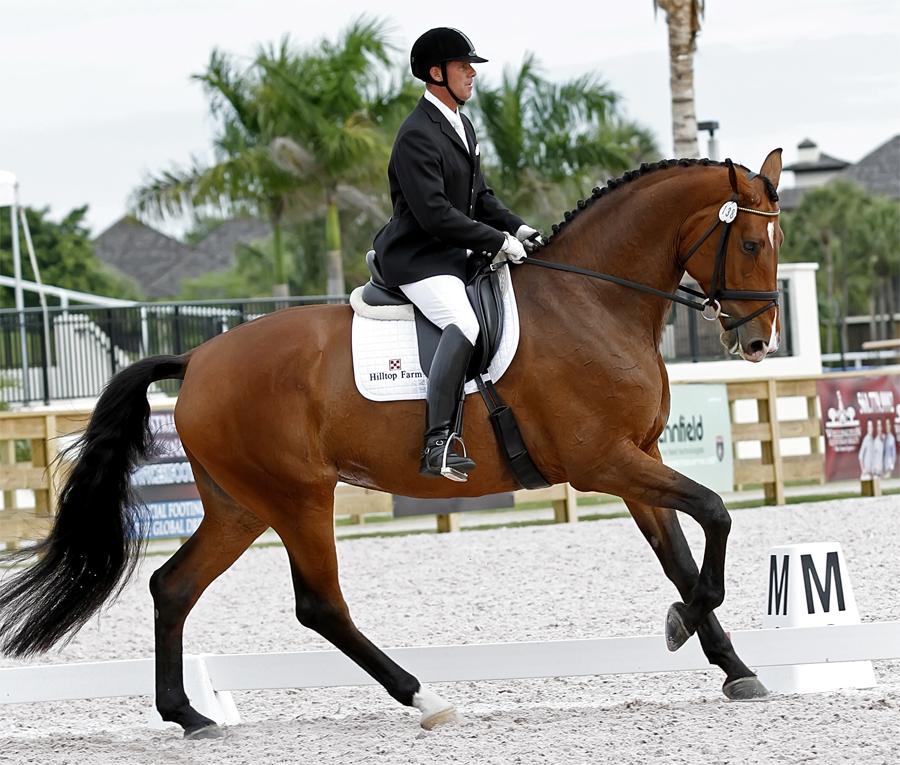 Ганноверская лошадь характеристика породы фото отзывы