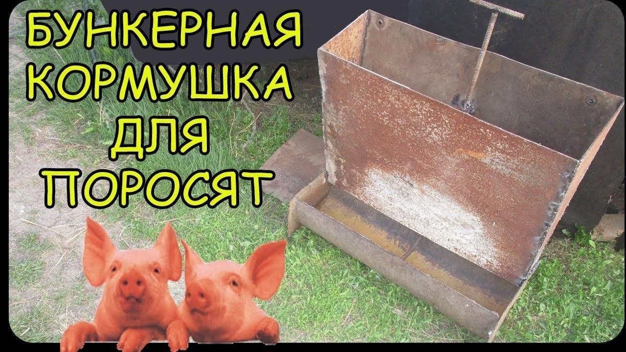 Как сделать кормушки для свиней: практичные и прочные конструкции