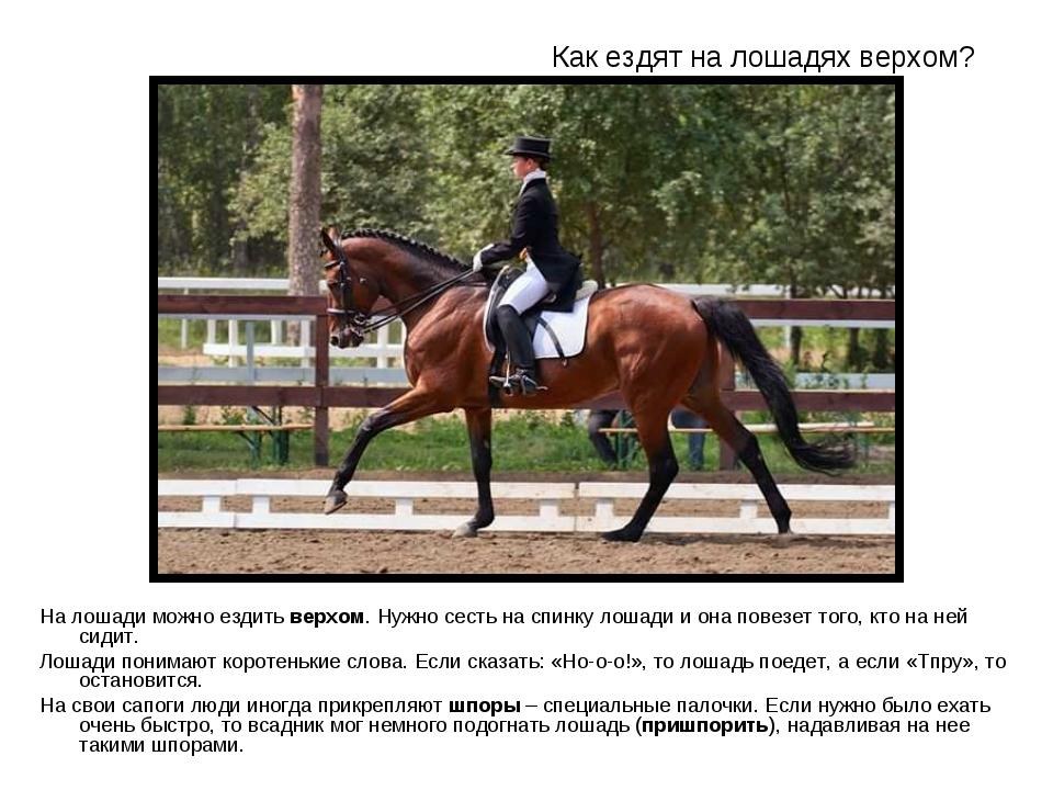 Как ездить на лошади: советы начинающим, стили езды