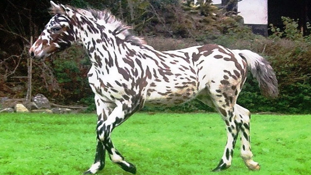 Топ-15 самых дорогих лошадей в мире