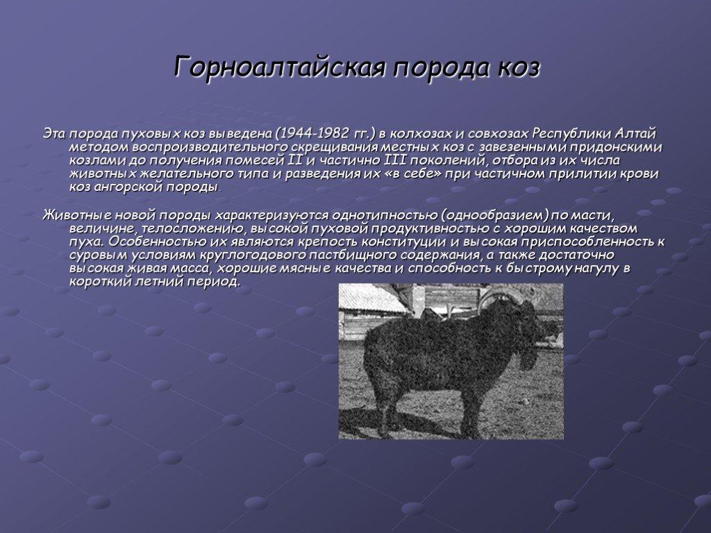 Оренбургские пуховые козы: характеристики, описания, условия содержания