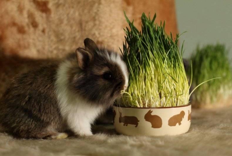 Какие цветы нельзя давать кроликам - ogorod.guru