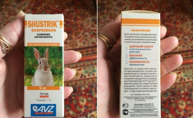 Глисты у кроликов: лечение самостоятельно, обзор препаратов
