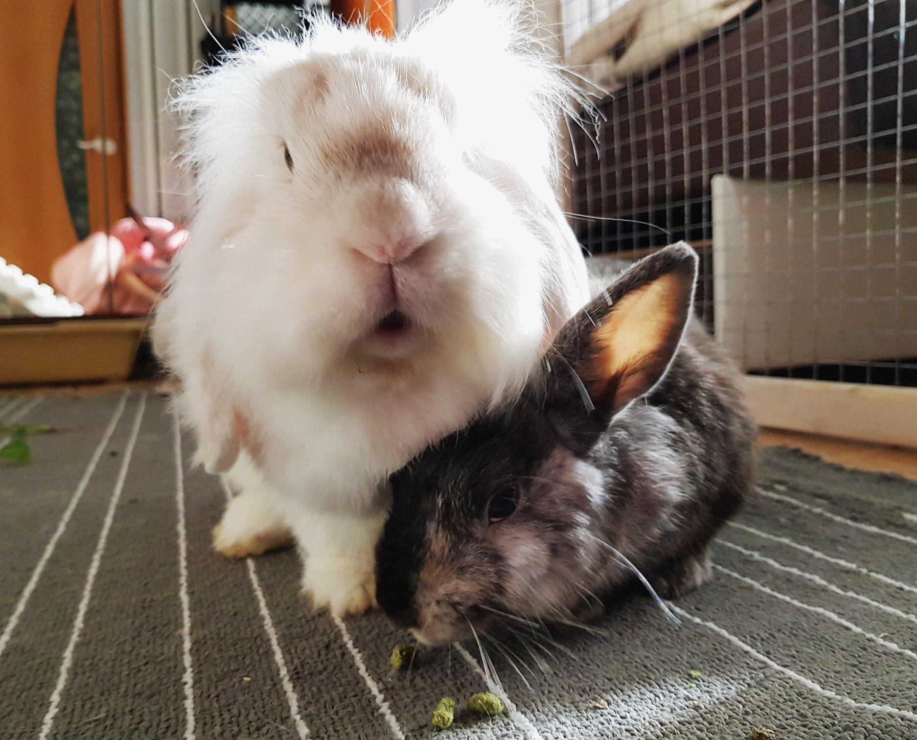 Сколько живет декоративный кролик — продолжительность жизни питомца в домашних условиях
