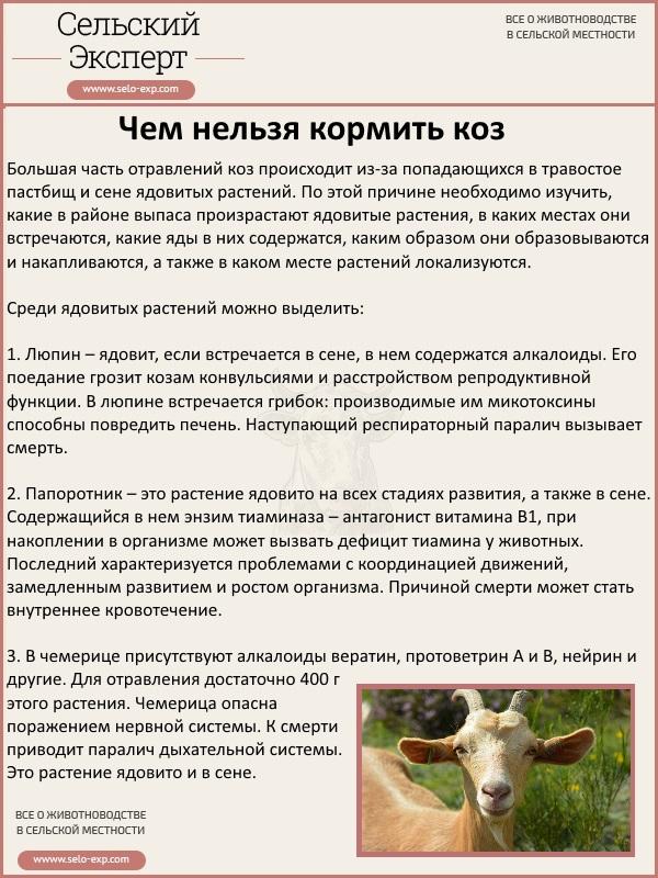 Ветеринария крупного рогатого скота помощь при отравлении