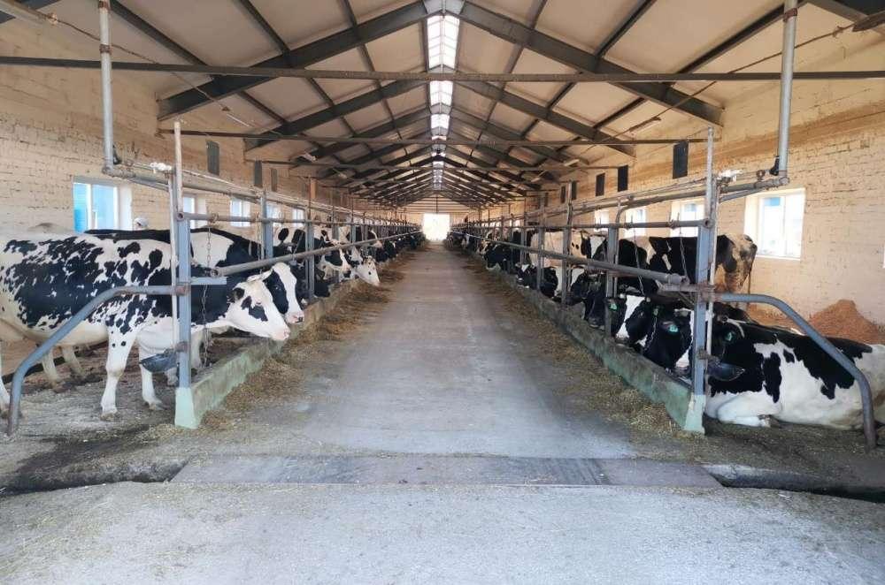 Мини-ферма крс на 10 голов - смотреть бизнес-план, строительство пошагово