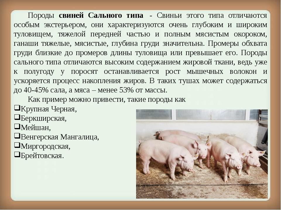 Порода свиней кармалы — описание, характеристики