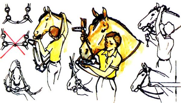 Учимся ездить верхом на лошади и правильно ею управлять