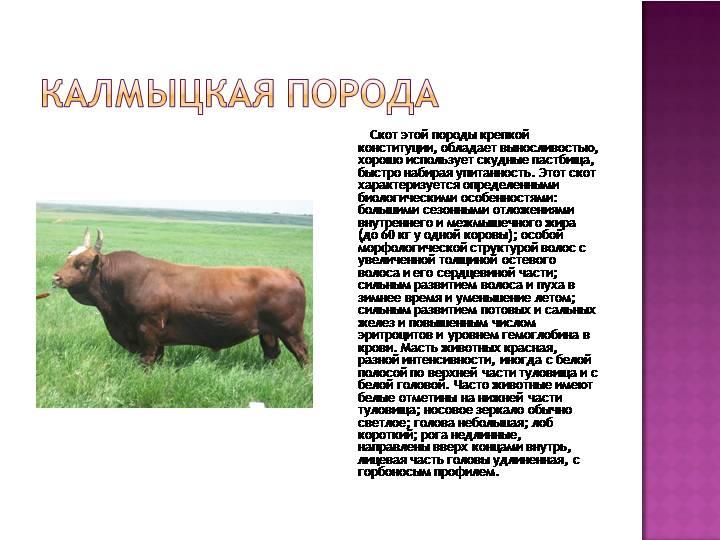 Биологические и хозяйственные особенности крупного рогатого скота