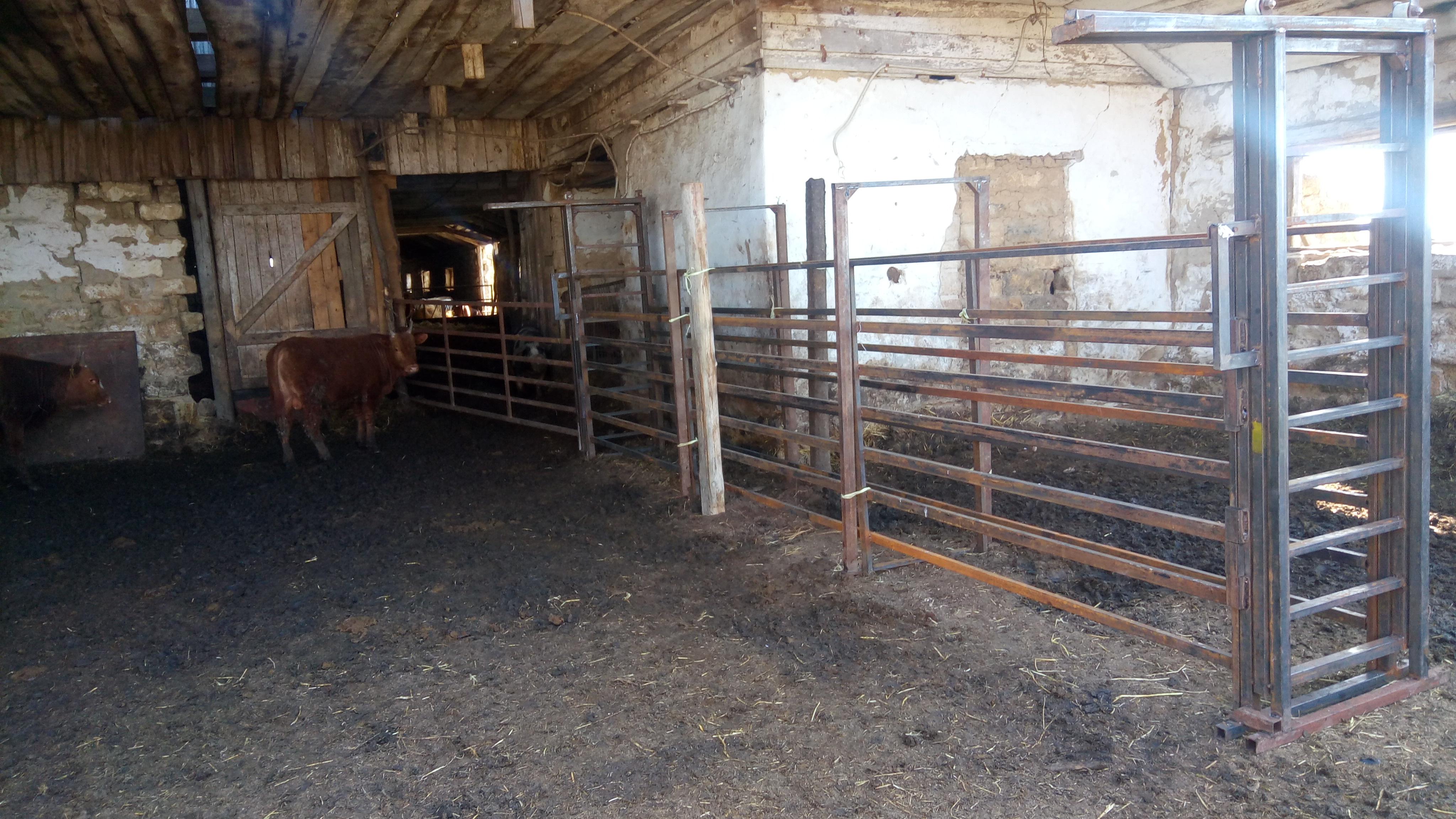 Как построить сарай для быков – возводим дом для крупного скота + видео