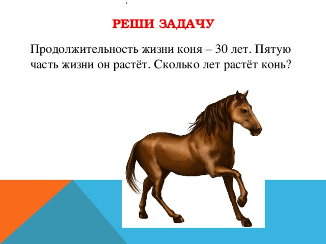 Сколько живет лошадь: продолжительность жизни