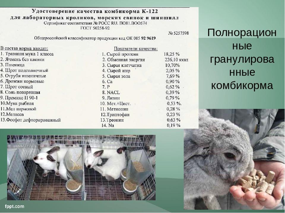 Можно ли и каким способом стоит давать соль кроликам, как изготовить лизунцы