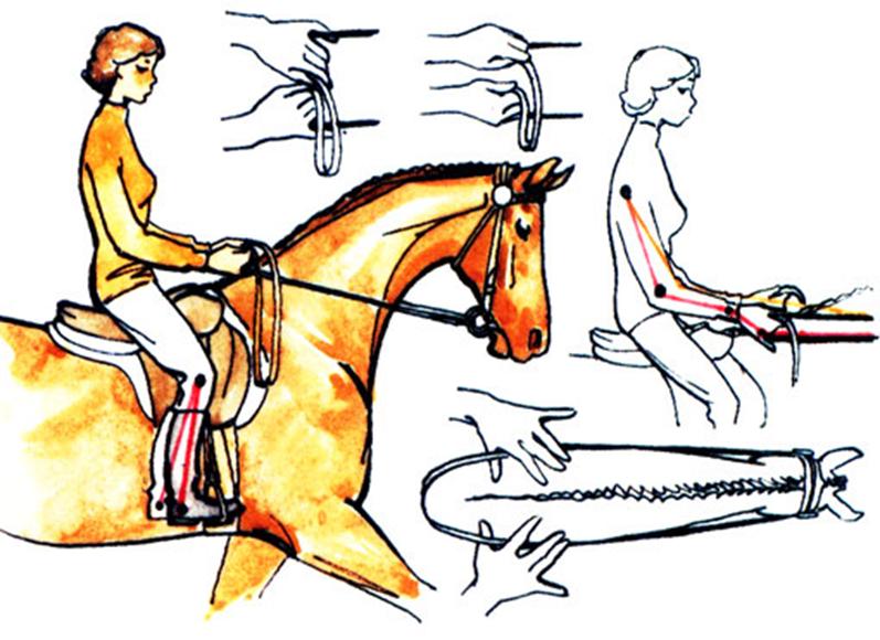 Как управлять лошадью: описание процесса, рекомендации