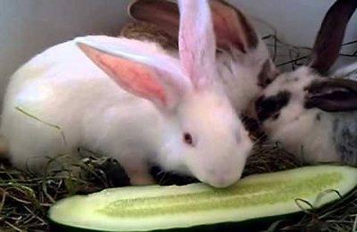 Можно ли давать подорожник кроликам, в каком виде и каких количествах
