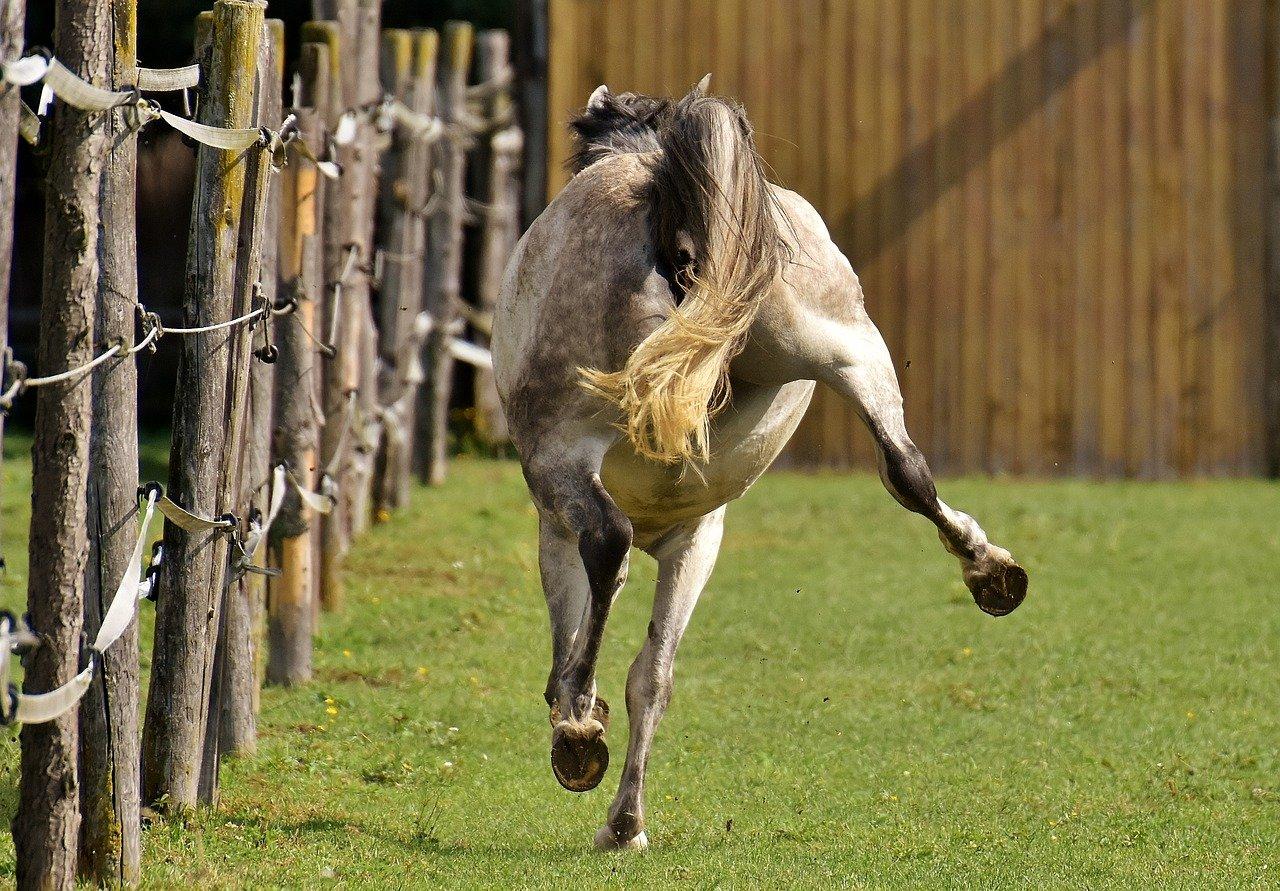 Не слушается!: дневник группы «клуб любителей лошадей»: группы - женская социальная сеть myjulia.ru