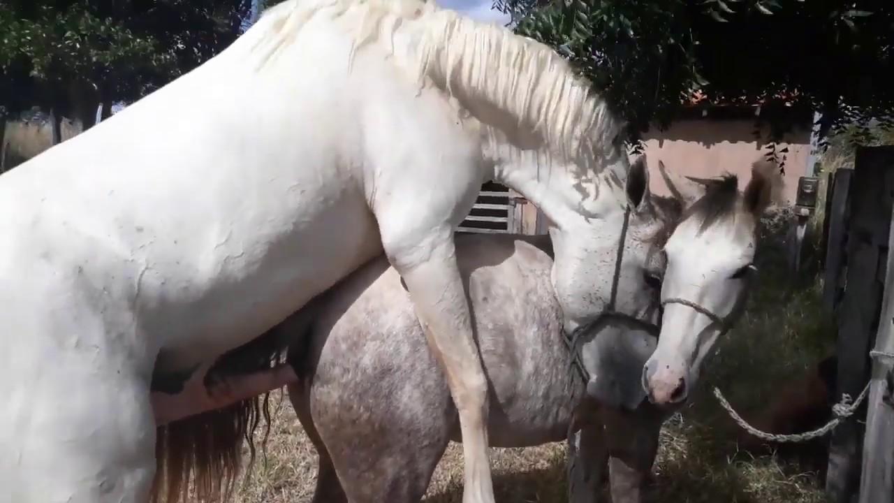 Размножение лошадей: как происходит процесс