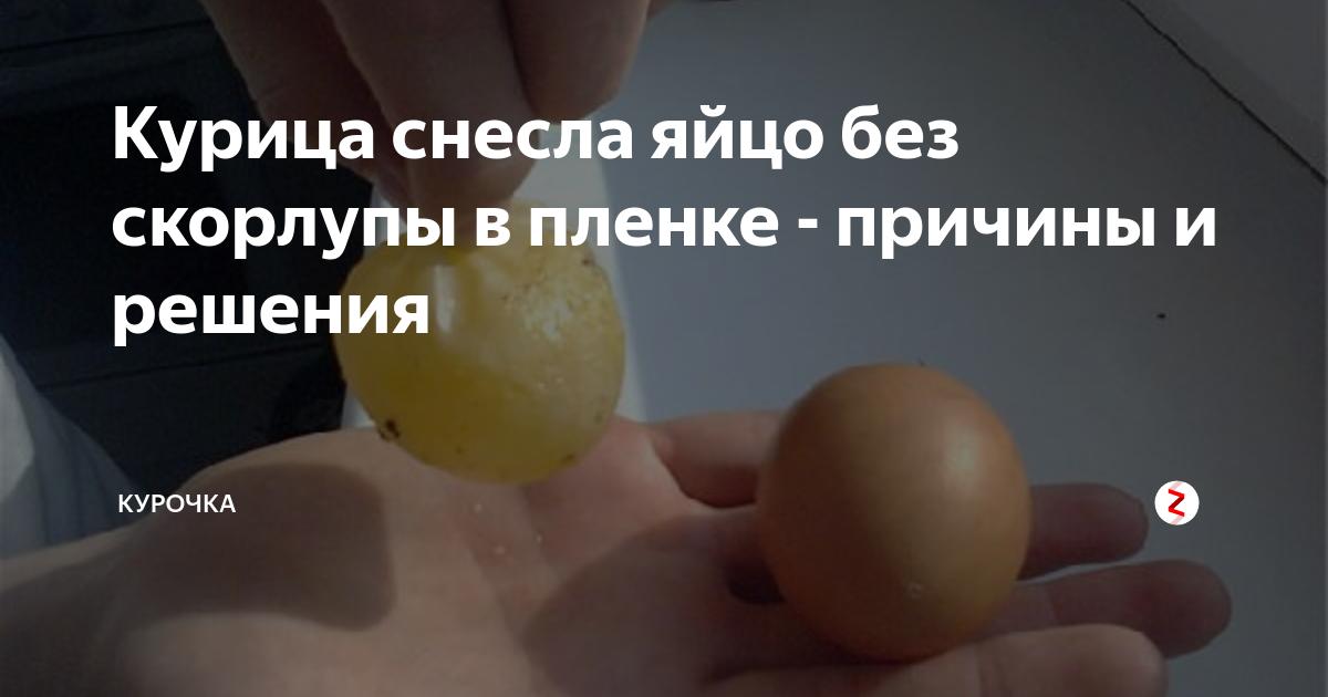 У несушек мелкие яйца — причины и что делать, как кур кормить