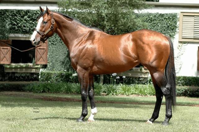 Самые большие лошади в мире: породы и экземпляры