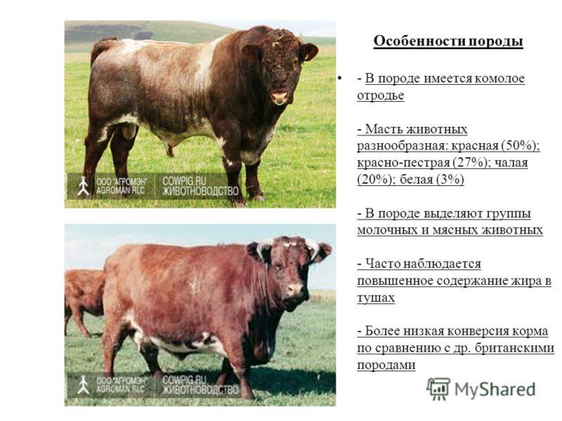 Разведение мясных коров: особенности и перспективы — cельхозпортал