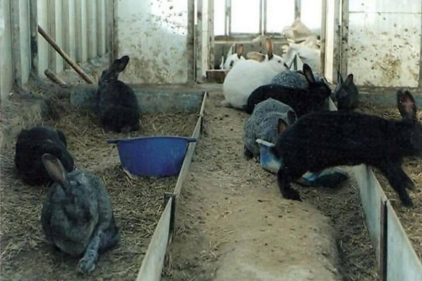 Совместное содержание кур и кроликов