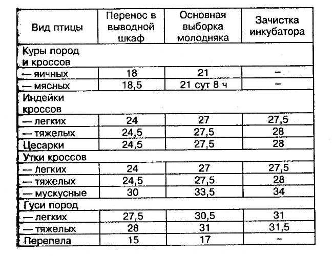 Инкубация фазанов в домашних условиях: режим и таблица