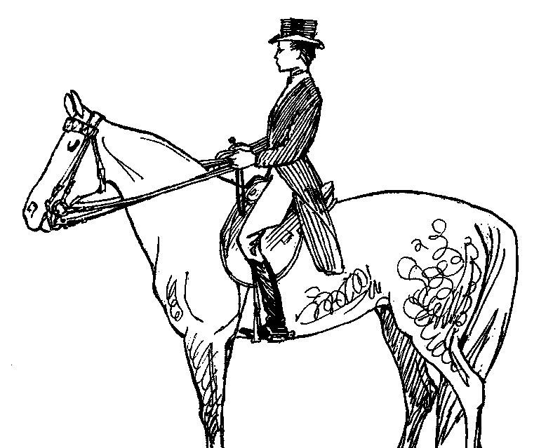 Как кататься на лошади: обучение верховой езде