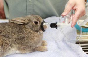 Уход за декоративным кроликом: стрижка ногтей, как правильно ухаживать и стричь когти