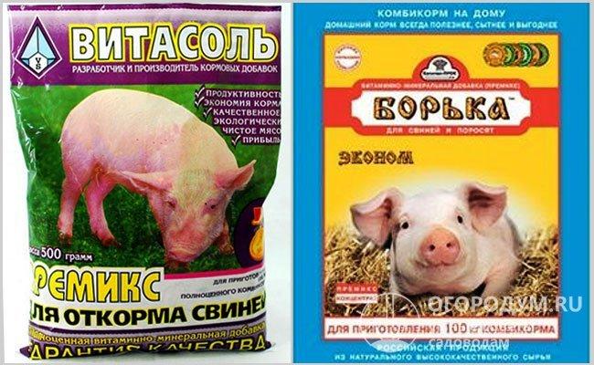 Как правильно кормить свиней для быстрого роста в домашних условиях: корма, добавки, комбикорма, органические добавки