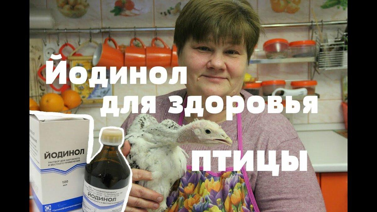 Йодинол для цыплят: пропорции