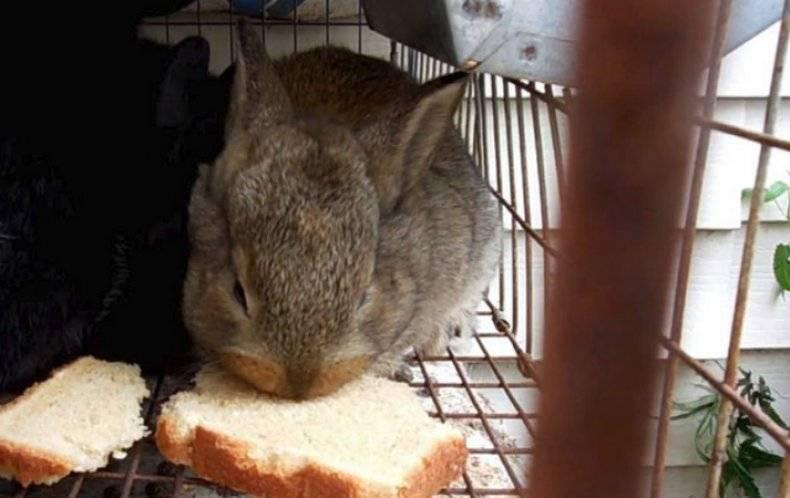 Что можно давать кроликам, а что нельзя давать