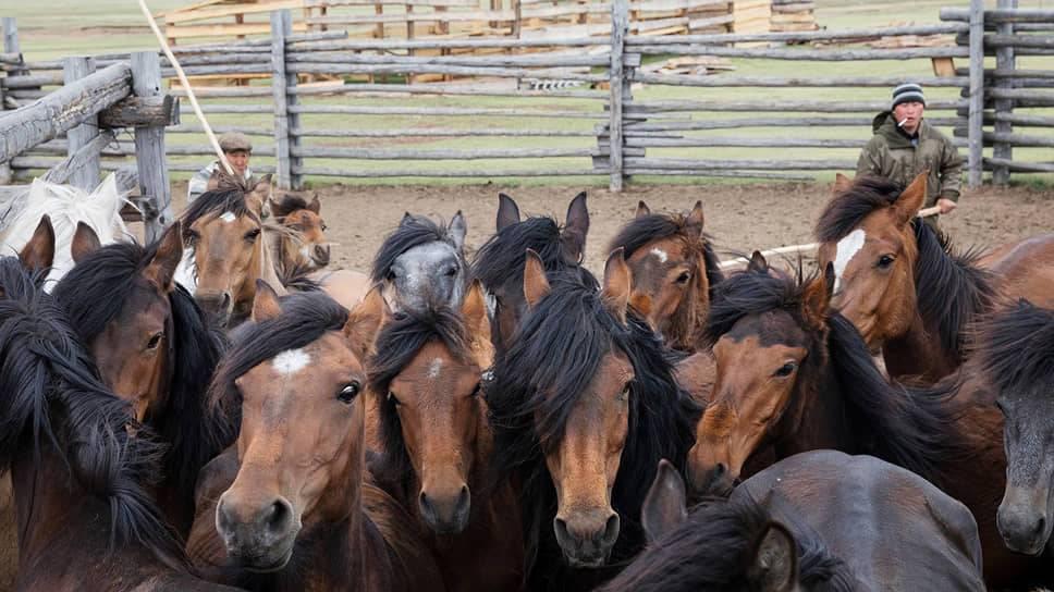 Сколько стоит завести и содержать лошадь | финтолк: нескучно о финансах! | яндекс дзен